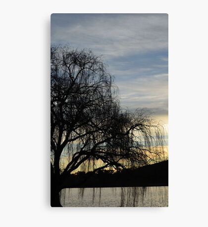 sombre willow Canvas Print