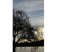 sombre willow Photographic Print