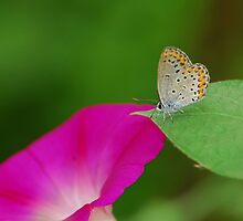 Morning glory and his guest  by davvi