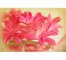 Drowning in Pink Photographic Print
