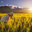 Girl in a golden field by Gustav Snyman