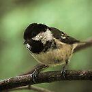 Little Bird by Jessica Loftus