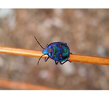 """Chloe The Stink Bug"" Photographic Print"