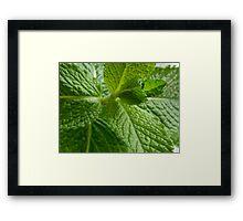 For The Tea Pot Framed Print