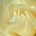 Glorious Gardenia by Sea-Change