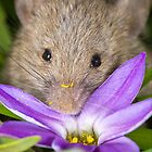 Delicate Mouse - Australian gardens by Barry Armstead