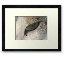 Eye of the Tiger............... Framed Print