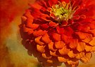 dramatic dahlia by Teresa Pople