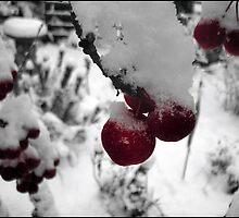 Cherries I by Nicholas Beales