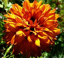 Vibrant Orange by Oliver Lucas