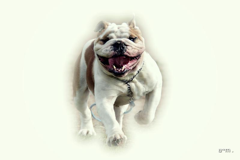~Floyd LOVES his walk~ by a~m .