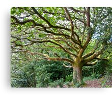 Wild Oak at Portmeirion Canvas Print