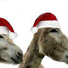 Wonkey Donkey Wishes by Ladymoose