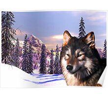 Mountain Wolf Portrait Poster