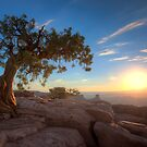 The Old Juniper Tree by Wojciech Dabrowski