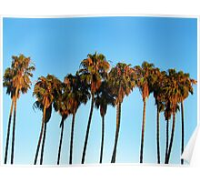 Palm Trees in the Sky Poster