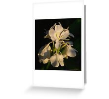 Tropical Flower in Cairns Greeting Card