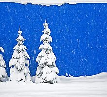 Snow-covered trees on blue by Mike Moruzi