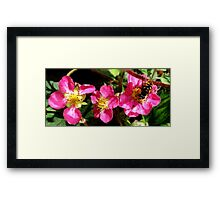 Caught Out!  Framed Print