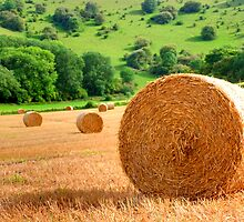 Harvest - West Sussex by Colin  Williams Photography