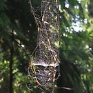 Spider Architecture by relayer51