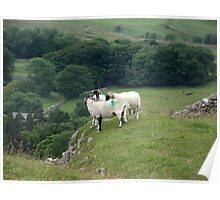 Sheep above Chapel Le Dale in Yorkshire Poster
