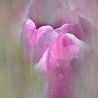 tulip by Teresa Pople