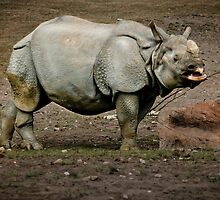 Rhino Drinking by mumblebug