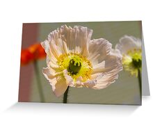 poppies in the garden Greeting Card