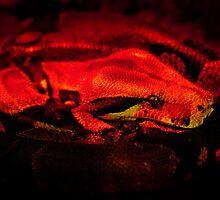 Red Boa by mumblebug