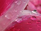 pinkness in the rain by millymuso
