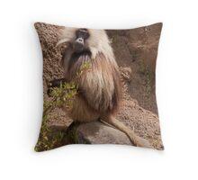 Gelada Baboon Throw Pillow