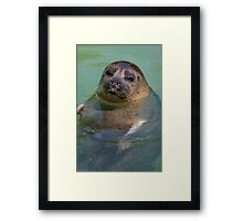 sea ​​lion at the zoo Framed Print