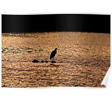 Grey Heron at Sunset Poster