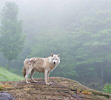 Through the fog by Daniel  Parent