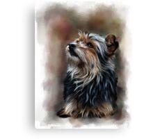 Shaggy pet dog portrait Canvas Print