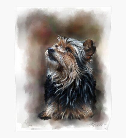 Shaggy pet dog portrait Poster