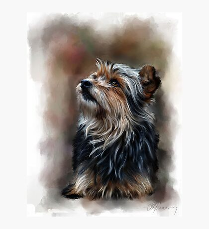 Shaggy pet dog portrait Photographic Print