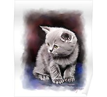 Pet Cat Portrait Poster
