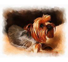 Cute pet dog portrait Photographic Print