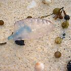 Bluebottle Jellyfish Two by Robert Phillips