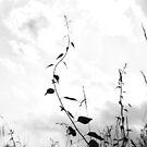 Edge of the Field  by DearMsWildOne
