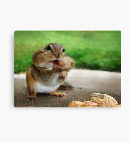 Addicted to Nuts Canvas Print