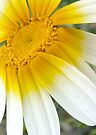 sunny side up by Teresa Pople