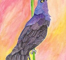 Great-Tailed Grackle by WicketIcons