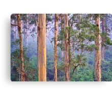 Misty Morning in the Karri Forest Canvas Print