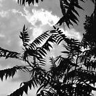 Tropic by DearMsWildOne