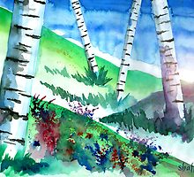 Birch Trees by Curtiss Shaffer