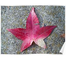 Maple Leaf on Concrete Poster
