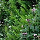 Ferns and Joe Pye Weed at Aguasabon Falls - Terrace Bay Ontario by loralea